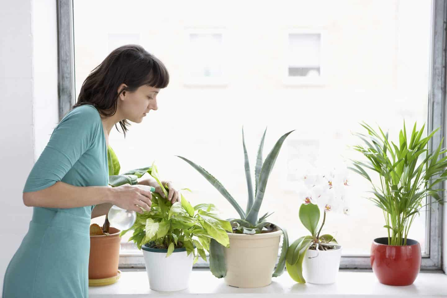 indoor plants as a gift
